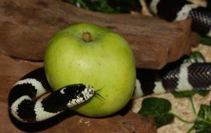 OPTAM, faut-il croquer la pomme ?